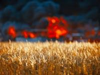 טרור חקלאי / צילום:  Shutterstock/ א.ס.א.פ קרייטיב