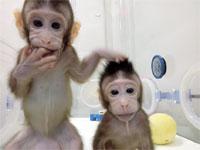 הקופים ששובטו / צילום: רויטרס