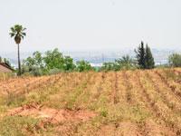 הפרשת קרקעות חקלאיות / צילום: תמר מצפי