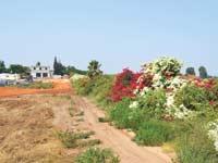 השטח ליד מושב תלמי אלעזר / צילום: גיל ארבל