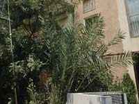 רחוב שלום עליכם 49 תל אביב / צילום: איל יצהר