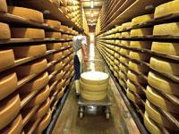 מפעל לייצור גבינה / צילום: רויטרס