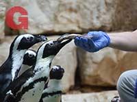 סיור מאחורי הקלעים. אינטימיות שבין חיות למטפלים / צילום: צוריאל פנש