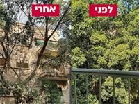 """העצים לפני ההרעלה ואחרי ההרעלה / צילום: א. כ""""ץ"""