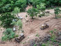 בירוא יערות בארגנטינה/ צילום: גרינפיס