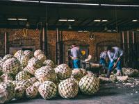 במפעל של פטרון/ צילום: יחצ חול