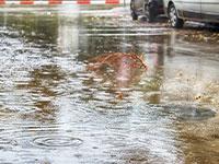 גשם, ישראל / צילום: shutterstock