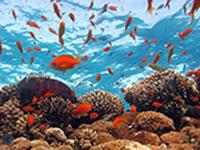 שונית האלמוגים, אילת / צילום: shutterstock