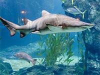 אקווריום לגידול כרישים / אינפוגרפיק: shutterstock, שאטרסטוק