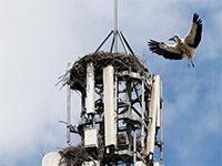 מגדל תקשורת מפריע לחסידות בספרד  / צילום: Paul Hanna, רויטרס