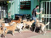 אביאל קדם / צילום: צער בעלי חיים