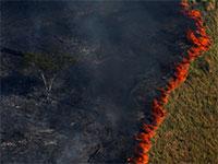 שריפות ביערות האמזונס, ברזיל / צילום: רויטרס