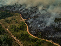 מתוך אסון יערות האמזונס / צילום: Victor Moriyama/Greenpeace