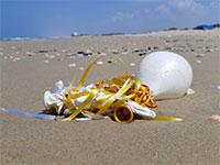חגיגות שהסתיימו בחוף מעיין צבי. הבלונים נשארו / צילום: דן בירון, המשרד להגנת הסביבה