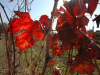 צבעים של תחילת החורף. הפרחים נובטים והגפן משירה עליה / צילום: יותם יעקבסון