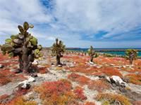 איי הגלפגוס, אקוואדור / צילום: shutterstock, שאטרסטוק