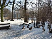 גן ציבורי בוורשה / צילום: בני מר