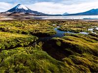שמורת הטבע לאוקה בצ'ילה / צילום: Shutterstock