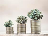 קנאביס, חברות קנאביס, פעילות קנאביס / אילוסטרציה: Shutterstock
