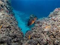 דקר הסלעים, מין בסכנת הכחדה / צילום: אורן קליין