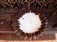 חולדות/ צילום: רויטרס - Himanshu Sharma