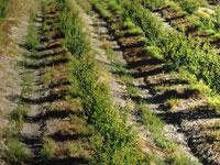 חקלאות / צילום: איל יצהר