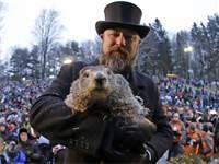חגיגות Groundhog Day עם המרמיטה שעונה לשם Punxsutawney Phil  בפנסילבניה / צילום: Gene J. Puskar, AP