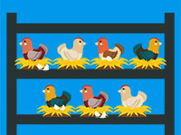 מה אפשר ללמוד ממחקר התרנגולות על פרודוקטיביות / איור: shutterstock, שאטרסטוק