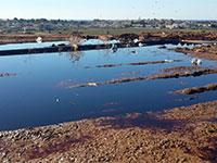 מפגעי הפסולת שתועדו במטמנת עברון  / צילום: דוברות המשרד להגנת הסביבה