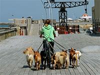 מוליכת כלבים בנמל תל אביב הריק מאדם. עבודה בימי קורונה / צילום: איל יצהר, גלובס