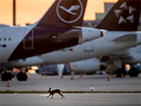 מטוסי חברת לופטהנזה מושבתים בשדה תעופה בגרמניה / צילום: תמר מצפי