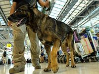 הכלבים גויסו למלחמה בקורונה / צילום: רויטרס
