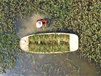 שדה תירס שנהרס בשיטפונות ביולי. מחיר התירס טיפס לשיא של 5 שנים / צילום: רויטרס