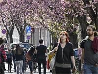 גרמנים בעיר בון, מאי. 782 אלף איש הגישו עד כה בקשה להשתתף במחקר / צילום: Martin Meissner, Associated Press