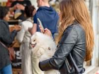 אישה צעירה עם טלפון סוללרי / צילום: שאטרסטוק