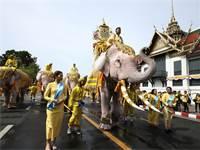 תהלוכת פילים מחוץ לארמון המלוכה בתאילנד / צילום: AP