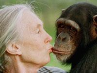 """ד""""ר גודול. """"יש חיות שניצלו מהכחדה ואזורים מוכים שחזרו לתמוך בטבע. אפשר לעשות דברים מדהימים"""" / צילום: AP - Jean-Marc Bouju"""