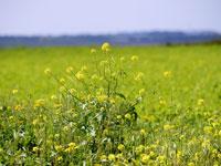 שדות, ושהקורונה תחכה / צילום: איל יצהר