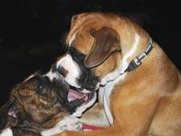 כלב חיית מחמד / צלם: תמר מצפי