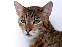 חתול יקר / צלם: רויטרס