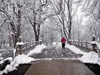 שלג בסנטרל פארק בניו יורק / צלם בלומברג