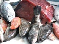 הדגים של הלוי / צלם תמר מצפי