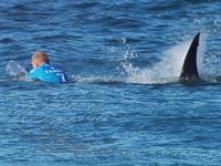 כריש תוקף גולש גלים, מייק פאנינג, אוסטרליה / צילום: וידאו