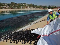 כדורים שחורים לוס אנג'לס / צילום: מהוידאו
