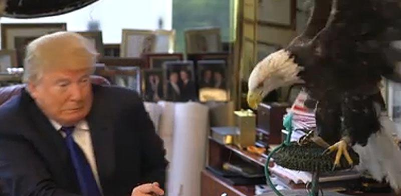 עיט לבן תוקף את דונלד טרמפ, טיים מגזין / צילום: וידאו