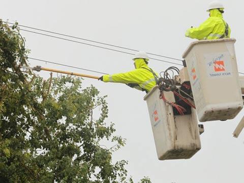 עץ על עמוד חשמל / צילום: חברת החשמל