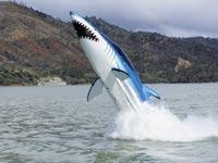 """כלי שיט אישי, סירת מרוץ אישית, Seabreacher / צילום: יח""""צ"""
