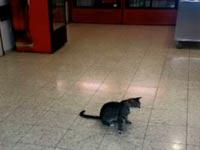 חתולי רחוב בבית חולים / צילום: מהוידאו