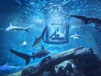 סוויטה מתחת למים / צילום: airbnb