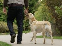 איסוף צואת כלבים/ צילום: מהוידאו